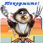 День защиты птиц в ЯФ МФЮА!