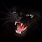 13 злобных котов!